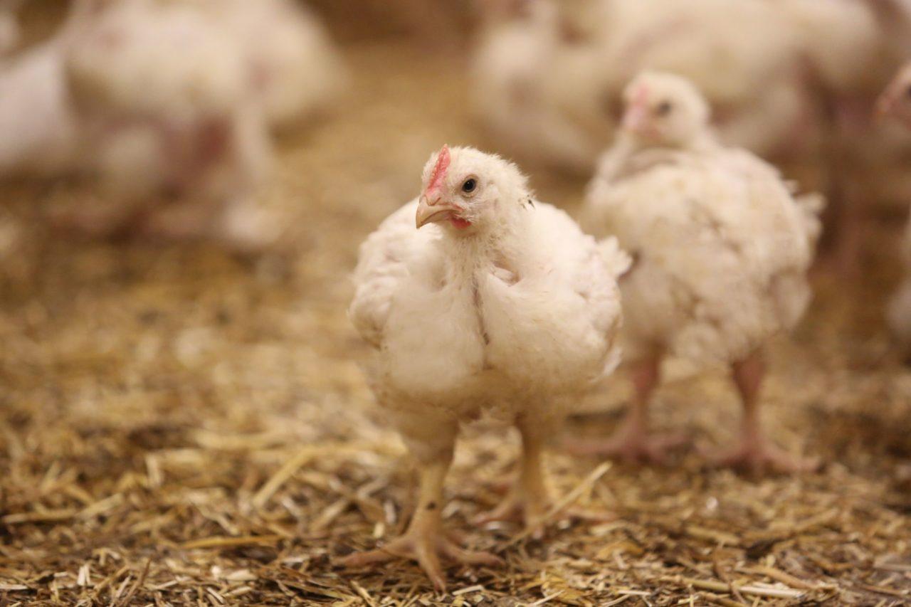 Filière avicole en france, filière responsable de La Nouvelle Agriculture
